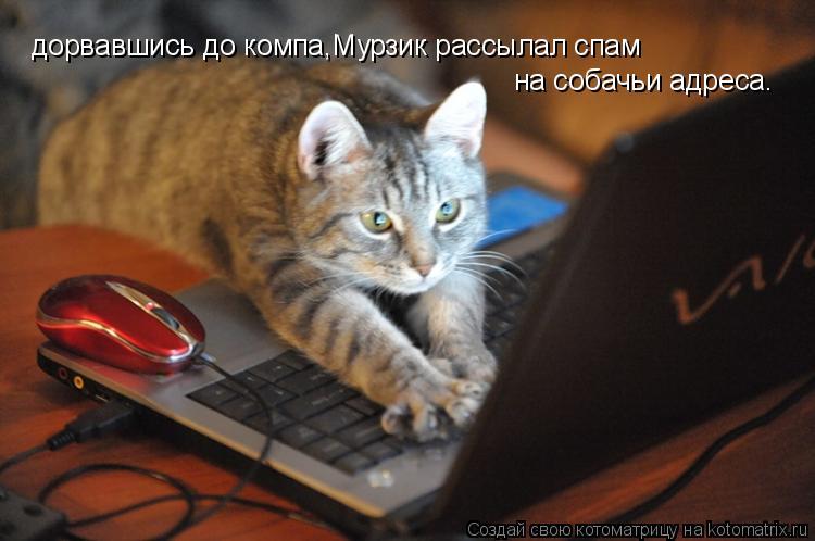 Котоматрица: дорвавшись до компа,Мурзик рассылал спам на собачьи адреса.