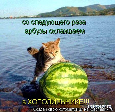 Котоматрица: со следующего раза арбузы охлаждаем в ХОЛОДИЛЬНИКЕ!!!
