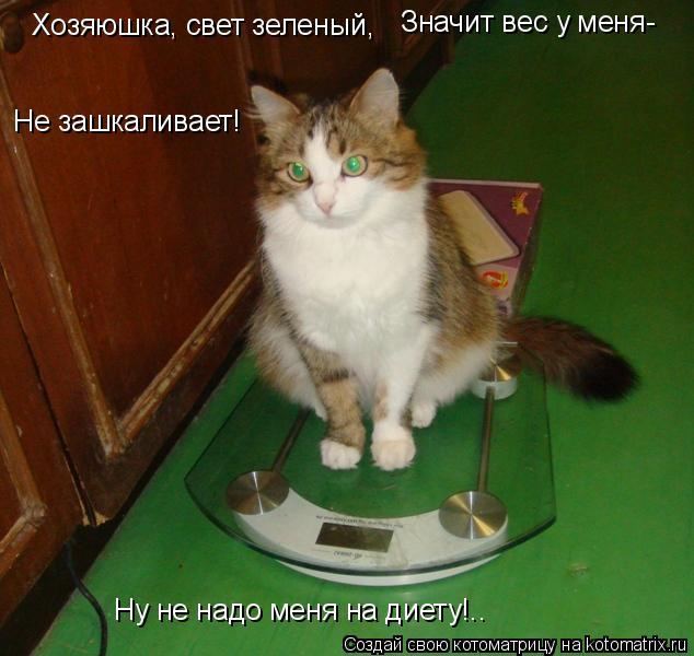 Котоматрица: Хозяюшка, свет зеленый, Значит вес у меня- Не зашкаливает! Ну не надо меня на диету!..