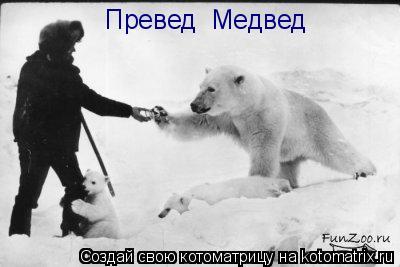 Котоматрица: Превед  Медвед