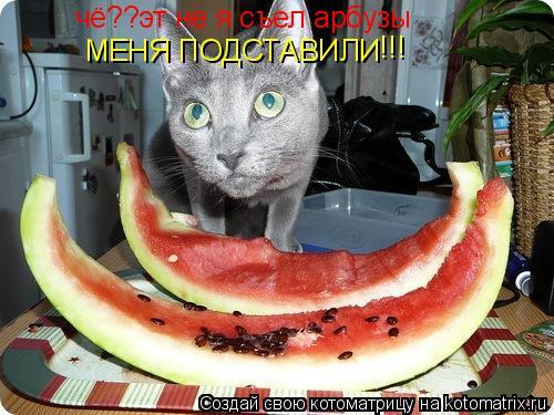 Котоматрица: чё??эт не я съел арбузы МЕНЯ ПОДСТАВИЛИ !!!