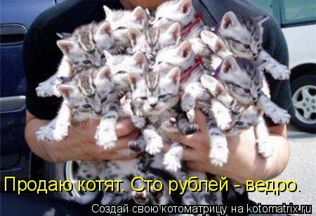 Котоматрица: Продаю котят. Сто рублей - ведро.