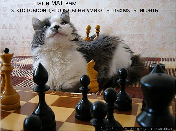 Котоматрица: шаг и МАТ вам , а кто говорил,что коты не умеют в шахматы играть