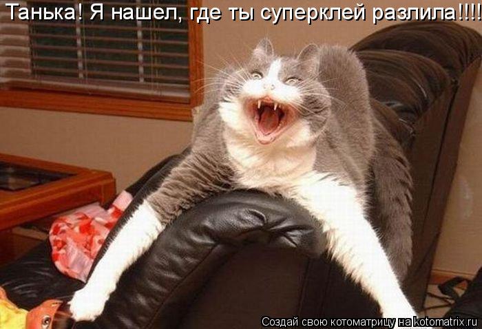Котоматрица: Танька! Я нашел, где ты суперклей разлила!!!!