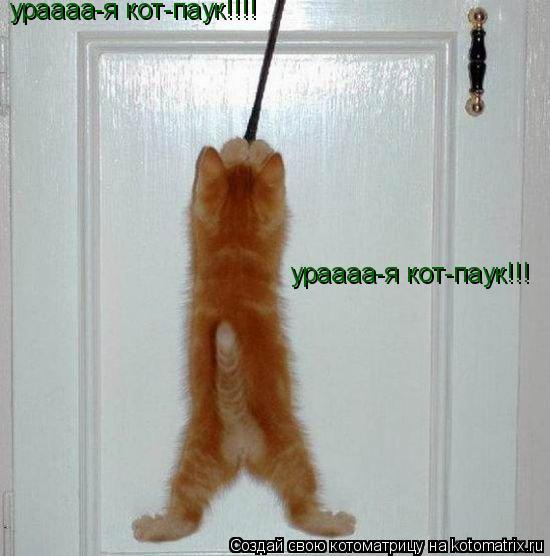 Котоматрица: ураааа-я кот-паук!!! ураааа-я кот-паук!!!!
