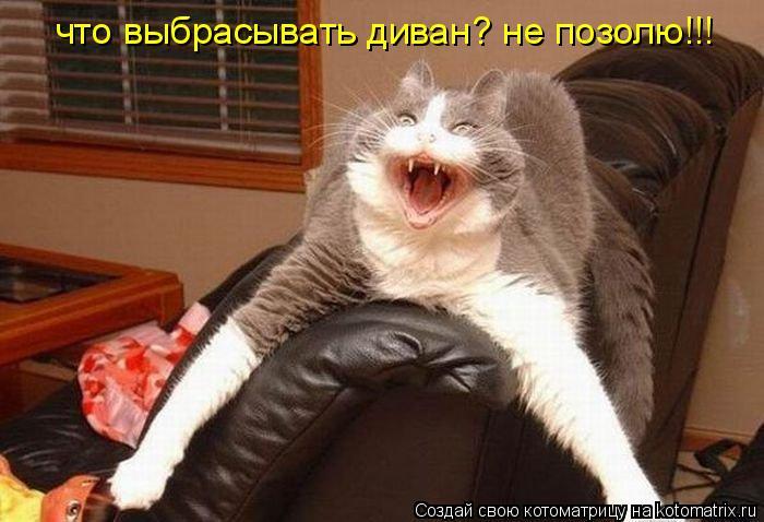 Котоматрица: что выбрасывать диван? не позолю!!!