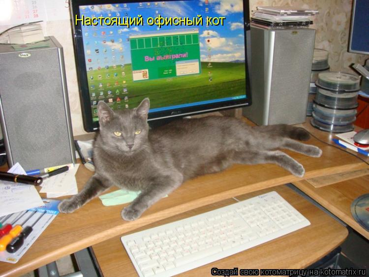 Котоматрица: Настоящий офисный кот