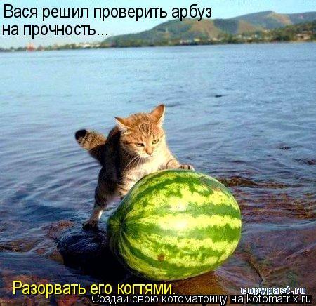 Котоматрица: Вася решил проверить арбуз  на прочность... Разорвать его когтями.