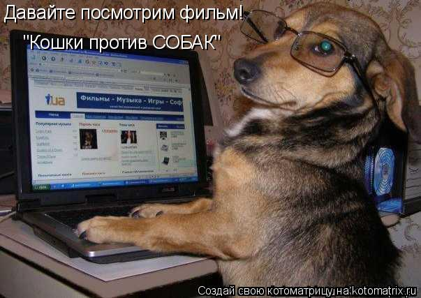 "Котоматрица: ""Кошки против СОБАК"" Давайте посмотрим фильм!"
