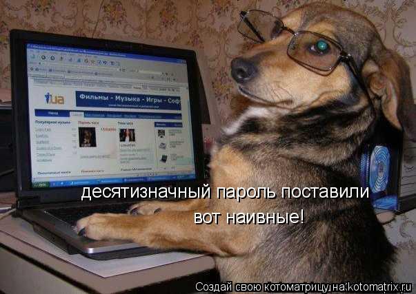Котоматрица: десятизначный пароль поставили вот наивные!