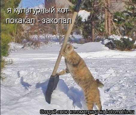 Котоматрица: я культурный кот покакал - закопал