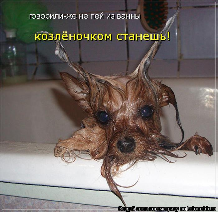 Котоматрица: говорили-же не пей из ванны  козлёночком станешь!