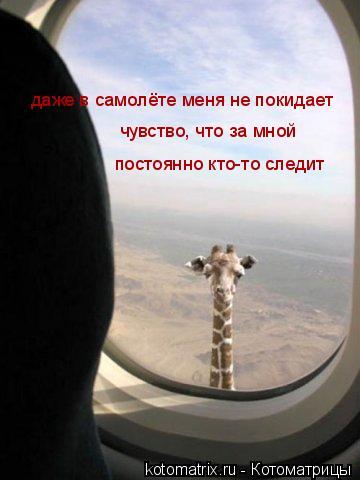 Котоматрица: даже в самолёте меня не покидает чувство, что за мной  постоянно кто-то следит