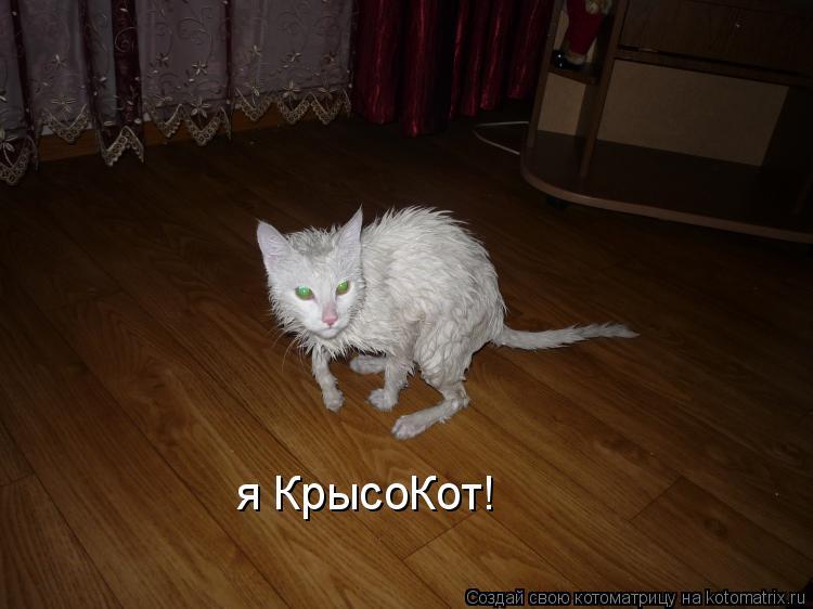 Котоматрица: я КрысоКот!