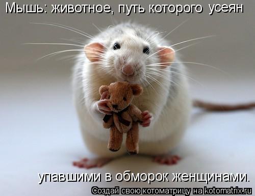 Котоматрица: Мышь: животное, путь которого  усеян   упавшими в обморок женщинами.