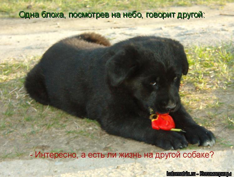 Котоматрица: Одна блоха, посмотрев на небо, говорит другой:   - Интересно, а есть ли жизнь на другой собаке?