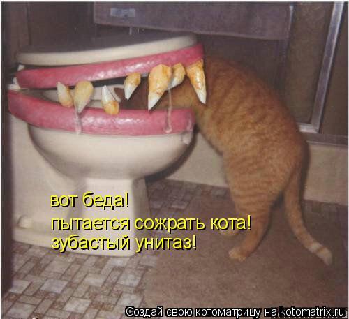Котоматрица: вот беда! пытается сожрать кота! зубастый унитаз!