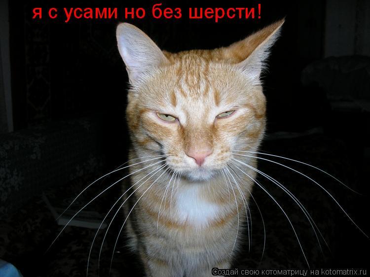 Котоматрица: я с усами но без шерсти! я с усами но без шерсти!