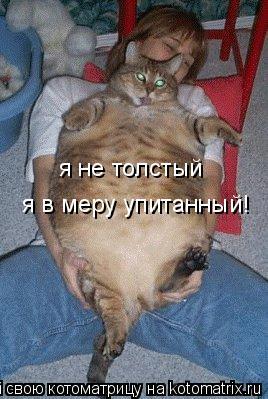 Котоматрица: я не толстый я в меру упитанный!