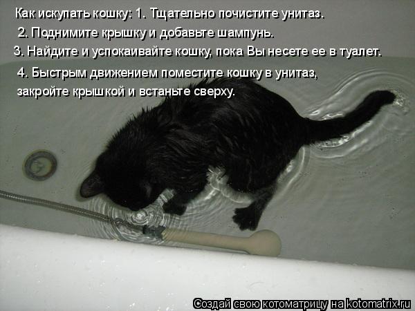 Котоматрица: Как искупать кошку: 1. Тщательно почистите унитаз.   2. Поднимите крышку и добавьте шампунь.  3. Найдите и успокаивайте кошку, пока Вы несете ее