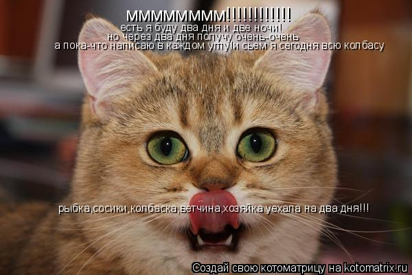 Котоматрица: мммммммм!!!!!!!!!!!! есть я буду два дня и две ночи! но через два дня получу очень-очень а пока-что написаю в каждом углу!и сьем я сегодня всю колба