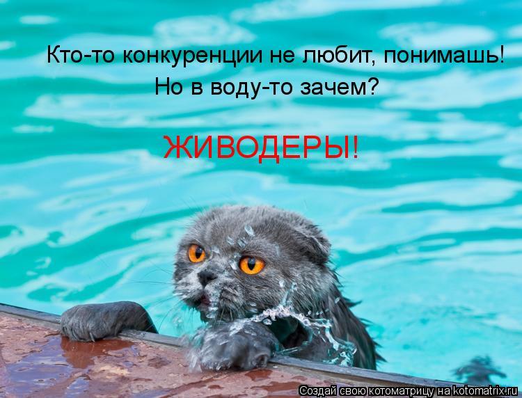 Котоматрица: Кто-то конкуренции не любит, понимашь! Но в воду-то зачем? ЖИВОДЕРЫ!
