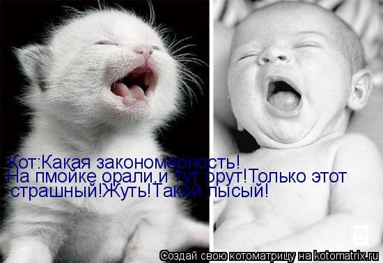 Котоматрица: Кот:Какая закономерность! На пмойке орали,и тут орут!Только этот страшный!Жуть!Такой лысый!
