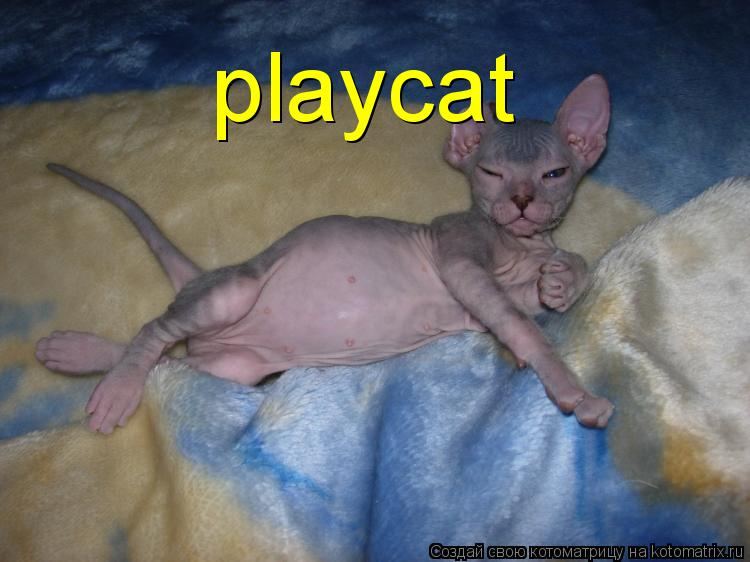 Котоматрица: playcat