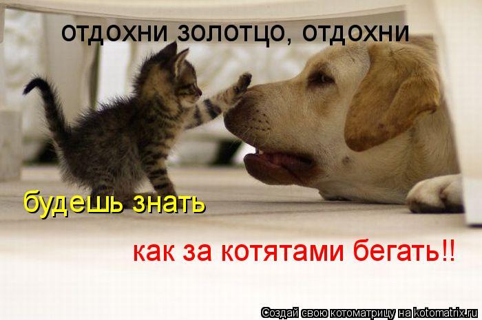 Котоматрица: отдохни золотцо, отдохни будешь знать  как за котятами бегать!!