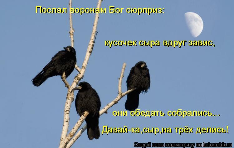 Котоматрица: Послал воронам Бог сюрприз: кусочек сыра вдруг завис, они обедать собрались... Давай-ка,сыр,на трёх делись!