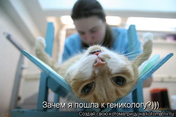 Котоматрица: Зачем я пошла к геникологу?)))