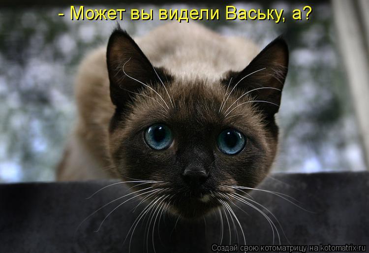 Котоматрица: - Может вы видели Ваську, а?