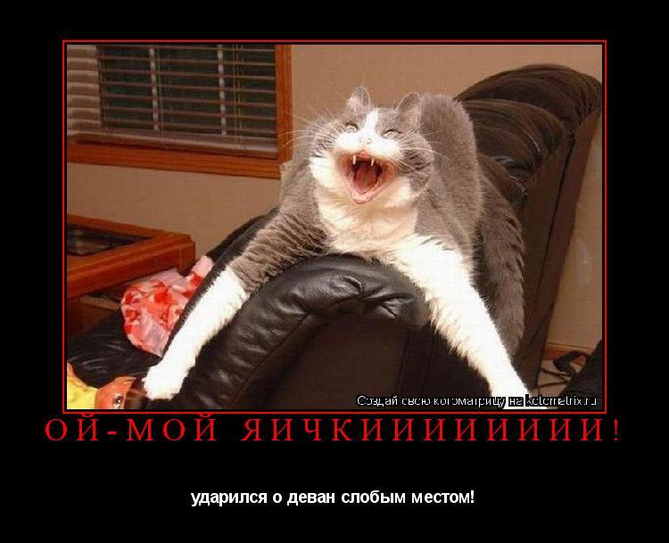 Котоматрица: ой-мой яичкииииииии! ударился о деван слобым местом!