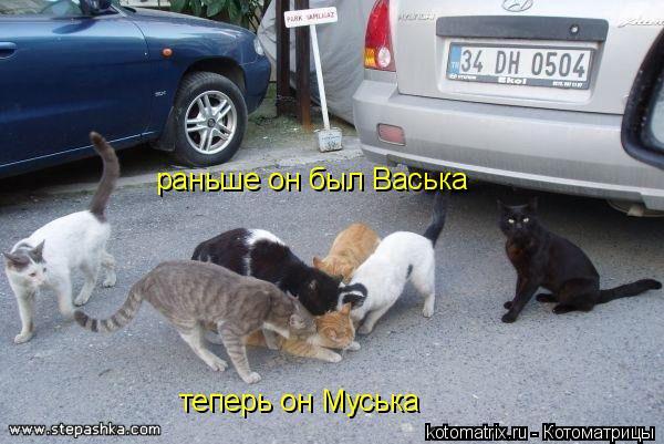 Котоматрица: теперь он Муська раньше он был Васька