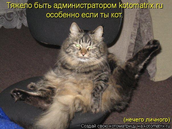Котоматрица: Тяжело быть администратором kotomatrix.ru особенно если ты кот. (нечего личного)