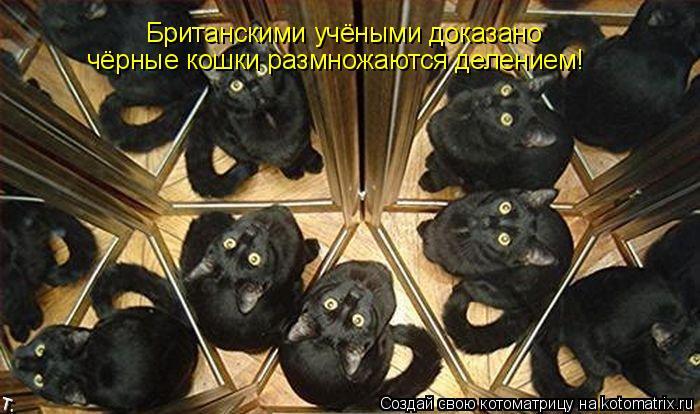 Котоматрица: Британскими учёными доказано чёрные кошки размножаются делением!
