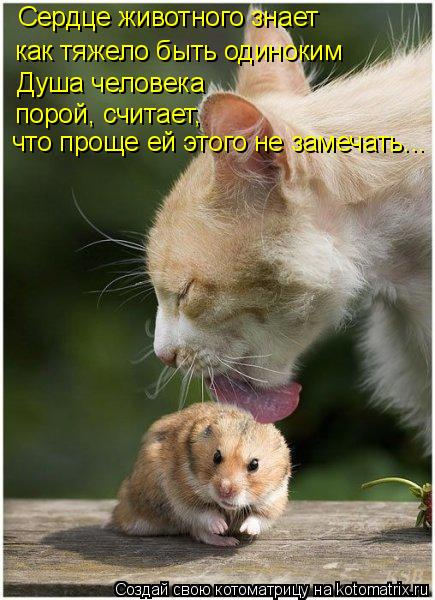 Котоматрица: Сердце животного знает как тяжело быть одиноким Душа человека порой, считает, что проще ей этого не замечать...