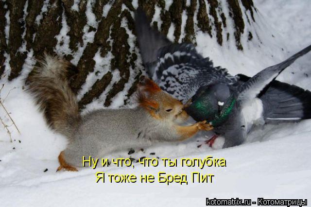 Котоматрица: Ну и что, что ты голубка Я тоже не Бред Пит