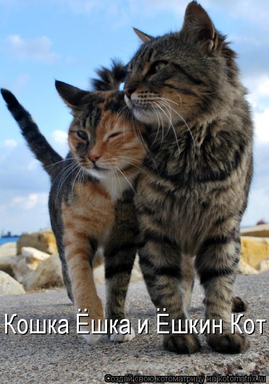 Котоматрица: Кошка Ешка и Ешкин Кот .. ..