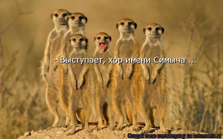 Котоматрица: - Выступает, хор имени Симыча ...