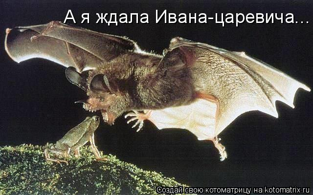 Котоматрица: А я ждала Ивана-царевича...