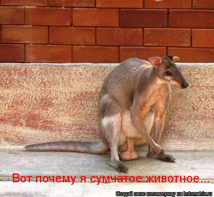 Котоматрица: Вот почему я сумчатое животное...