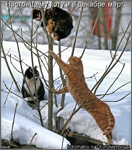 Котоматрица: Настоящему коту и в декабре март.