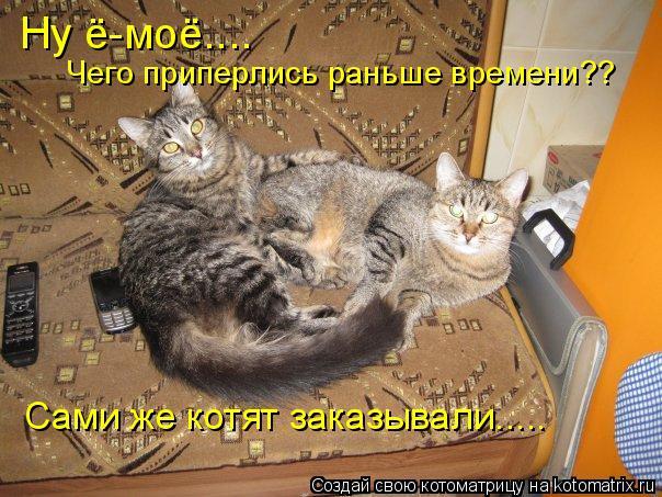 Котоматрица: Ну ё-моё.... Чего приперлись раньше времени?? Сами же котят заказывали.....