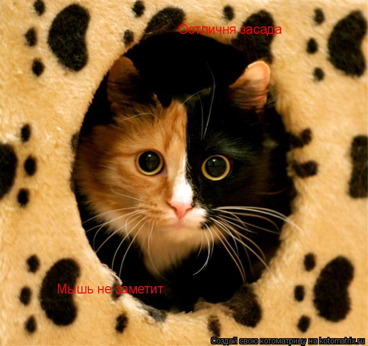 Котоматрица: Оотличня засада Мышь не заметит