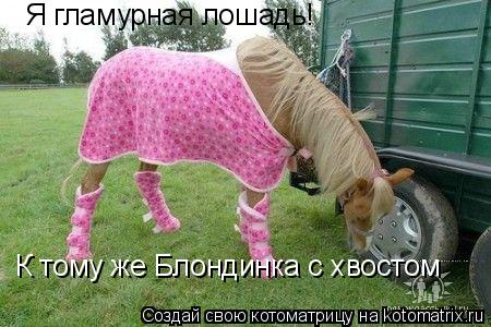 Котоматрица: Я гламурная лошадь! К тому же Блондинка с хвостом