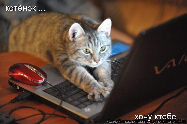 Котоматрица: котёнок.... хочу ктебе...