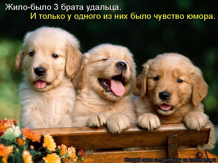Котоматрица: Жило-было 3 брата удальца. И только у одного из них было чувство юмора.