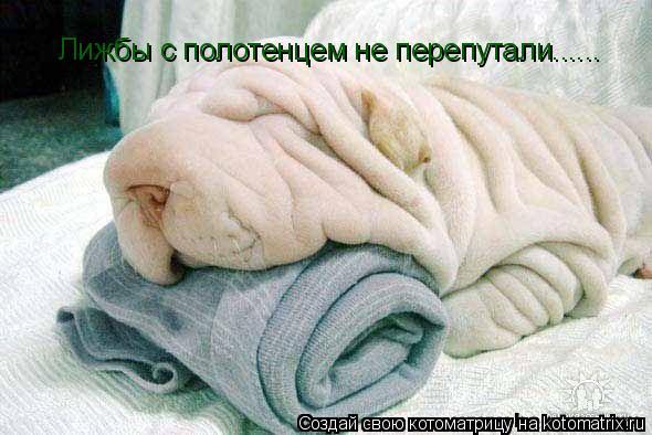 Котоматрица: Лижбы с полотенцем не перепутали......