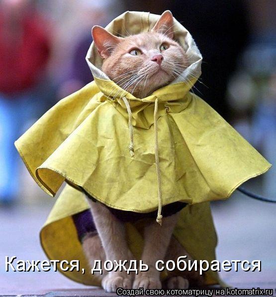 Котоматрица: Кажется, дождь собирается
